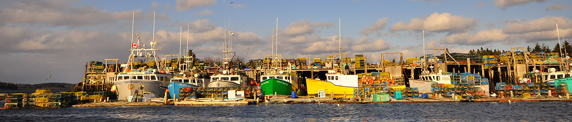 Homard-bateaux2.jpg